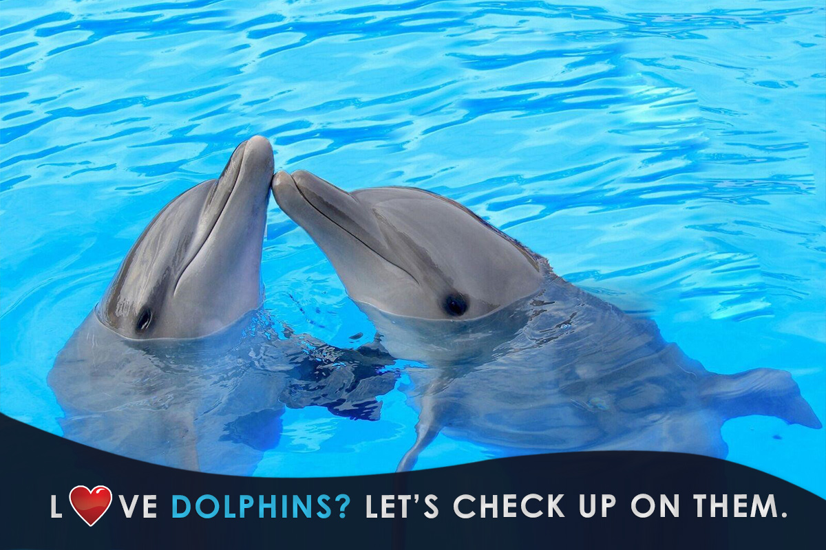 Love dolphins? Let's check up on them.